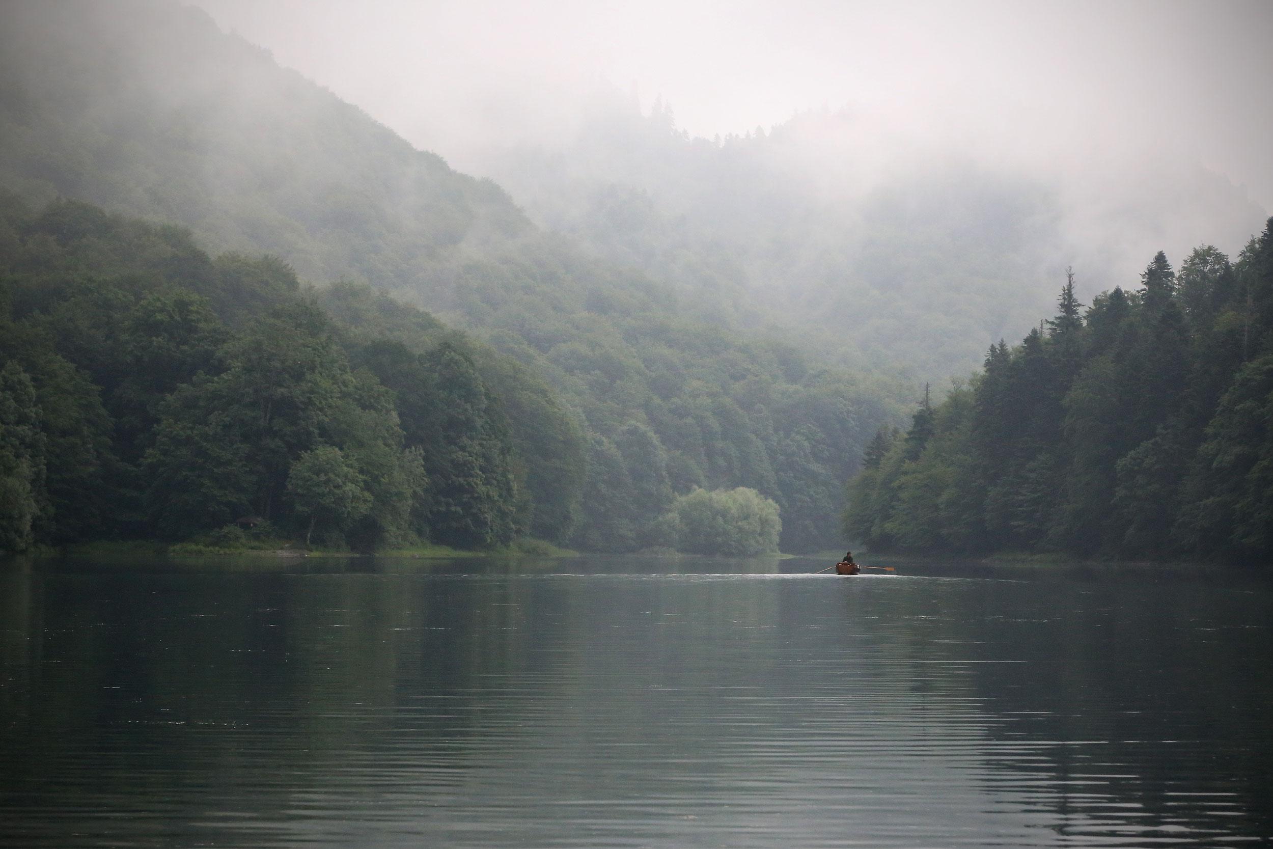 raakt binnenkort zijn oerbos kwijt