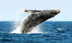 Waar ecologisch verantwoord walvissen spotten?