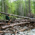 Della Falls Trail: adventure on Vancouver Island